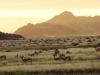 namib-desert-dawn