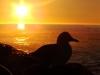 seagull-campsbay