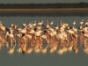 makgadikgadi-pans-flamingos