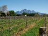 simonsberg-winelands