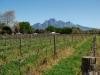 simonsberg-winelands