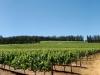 vineyards11