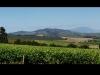 wine-estate-view