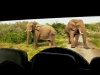 elephants-addo