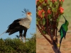 secretary-bird-malachite-sunbird