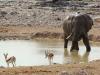 etosha-elephant-springbok-waterhole
