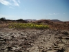 flowers-namibia-desert