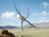 orb-spider