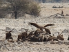 vultures-ethosa