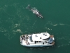 aerial-view-whale-watching
