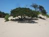 tree-beach-transkei