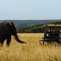 The Game Drive Experience