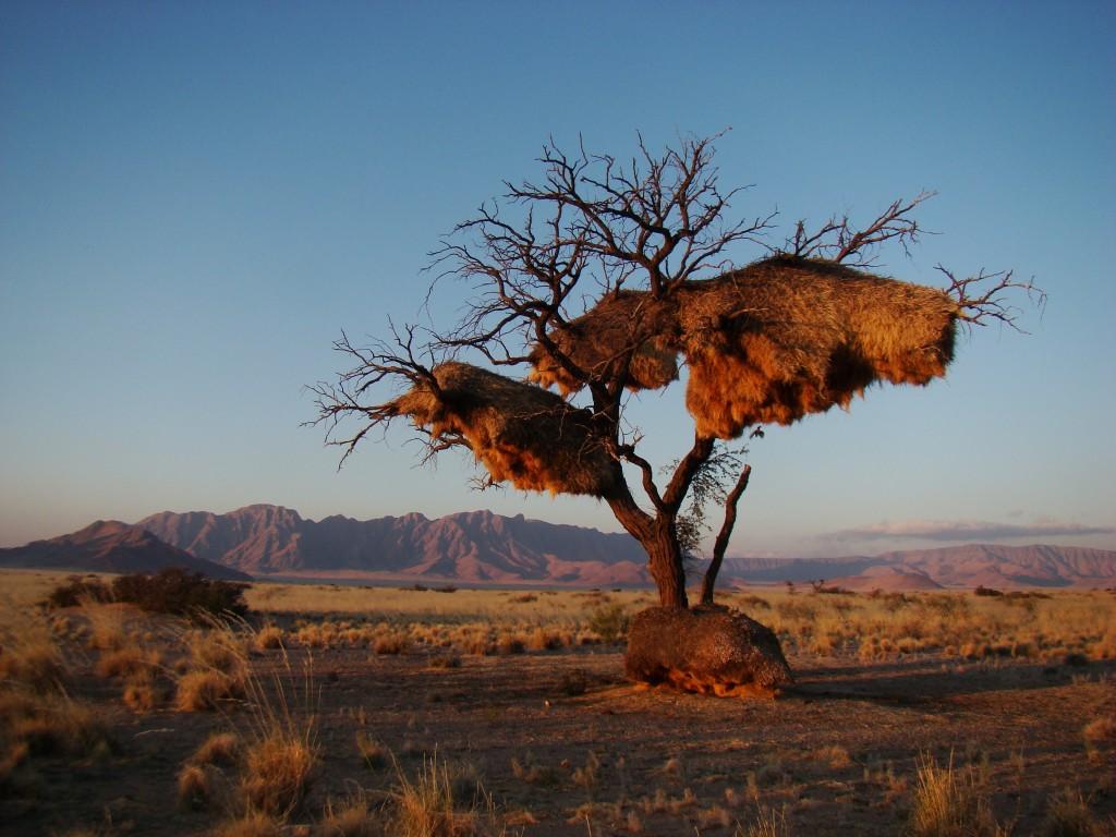 Namibia, overland, photographic, birding, safaris