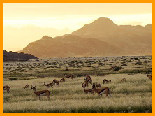 Namibia eco-tours