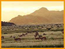 Namibia eco-tours