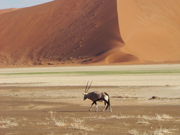 Namibia tours, Namibian wildlife, Sossusvlei accommodation, private tours South Africa